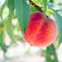 Peach!